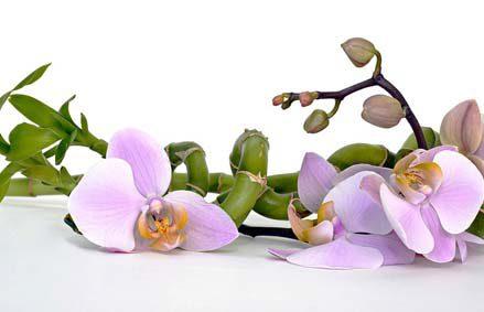 Produits de beauté bio et cosmétiques naturels made in france